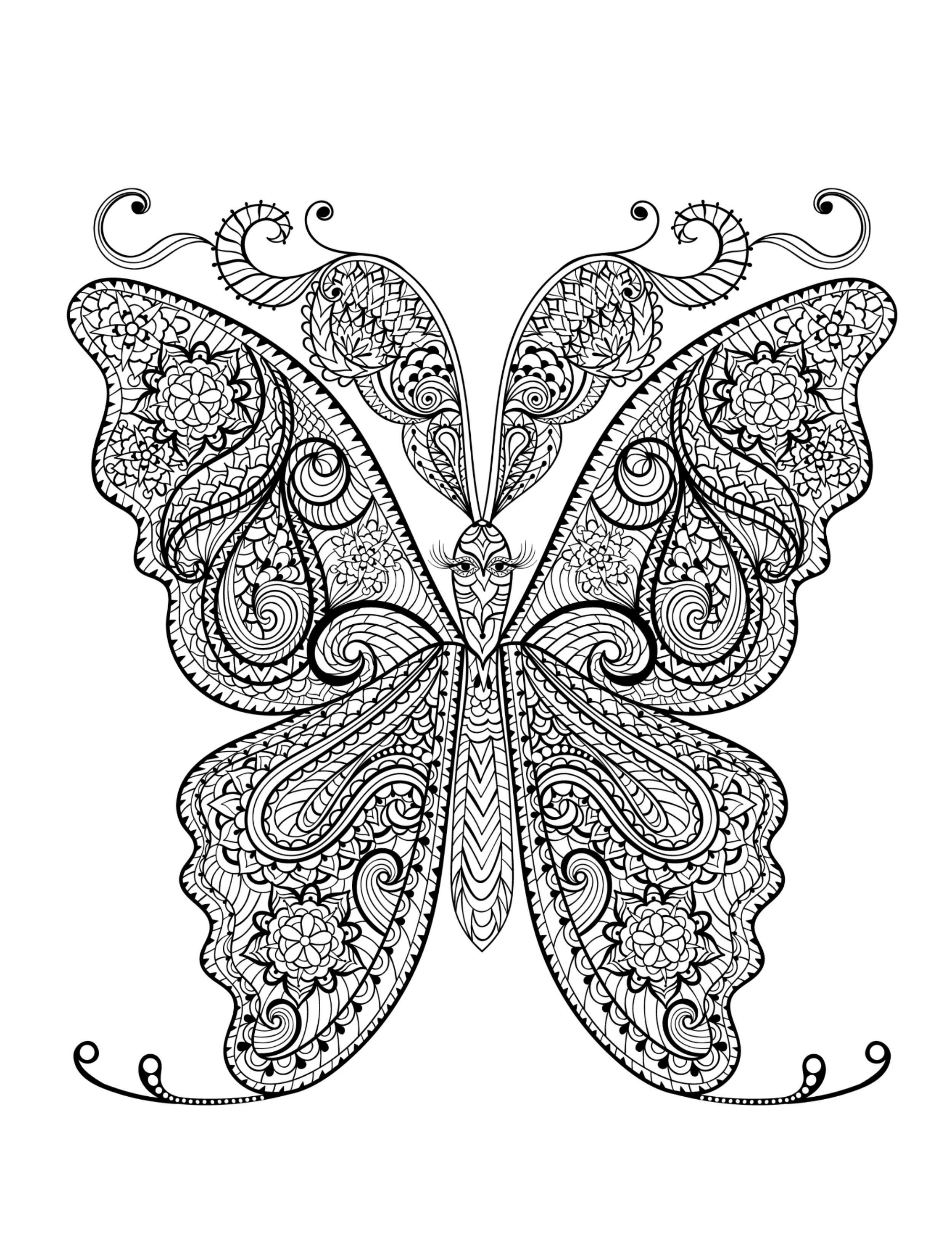 adult coloring books butterfly