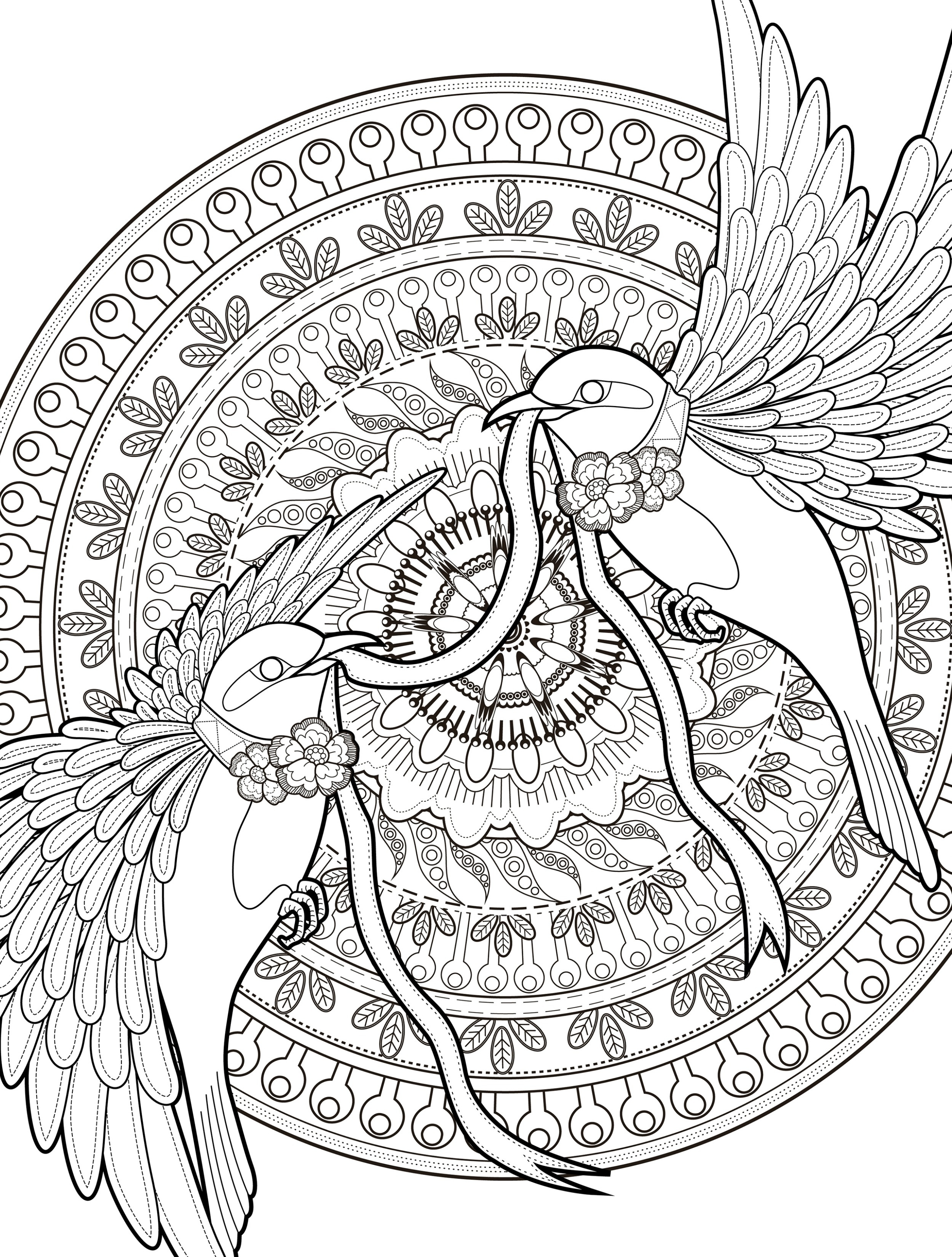 adult coloring books love bird