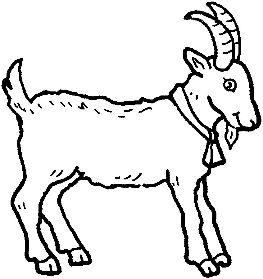 animal coloring pages goat