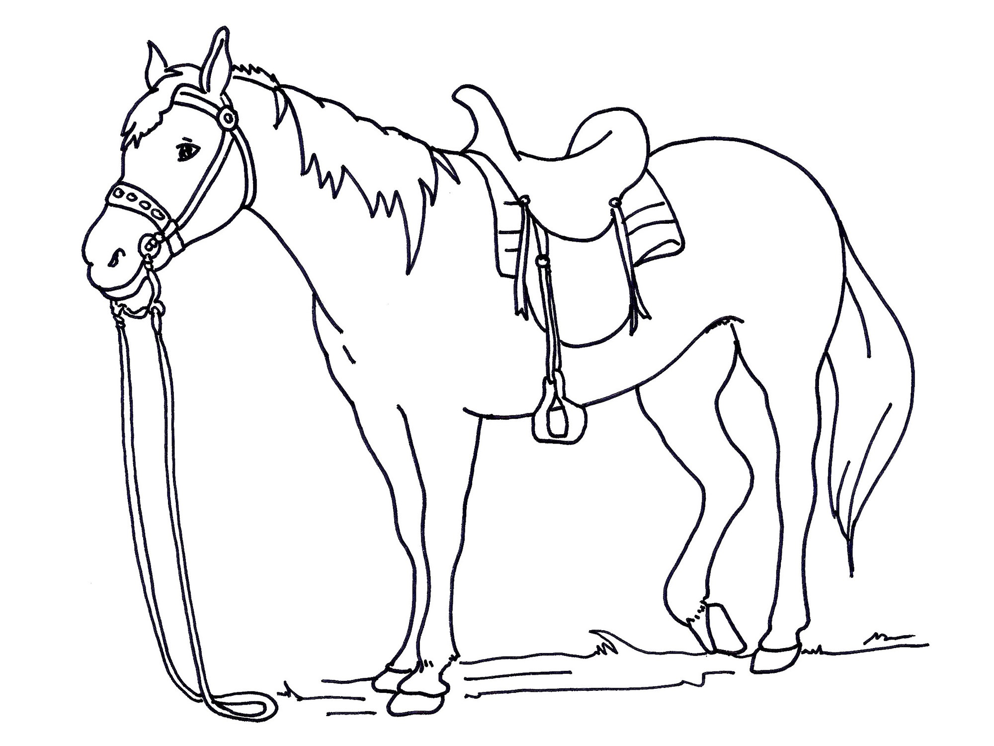 animal coloring pages horse
