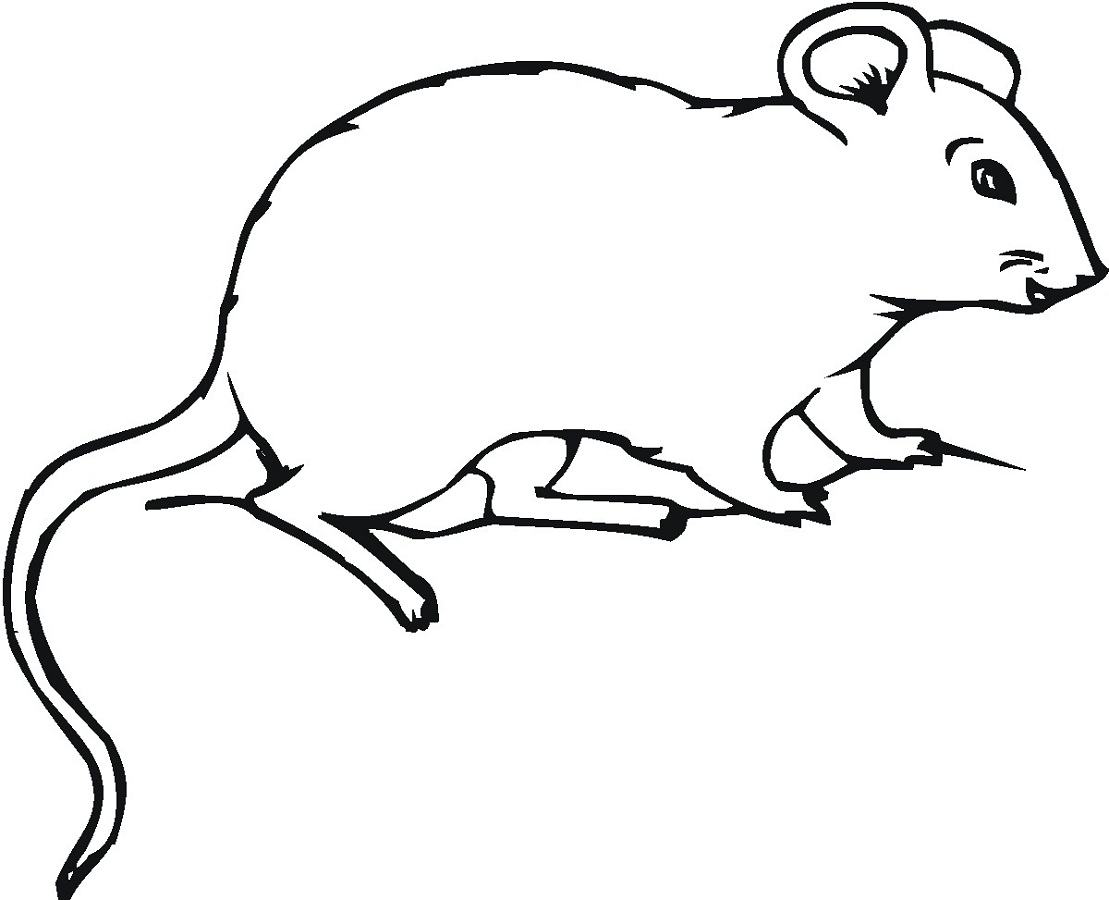animal coloring pages mouse