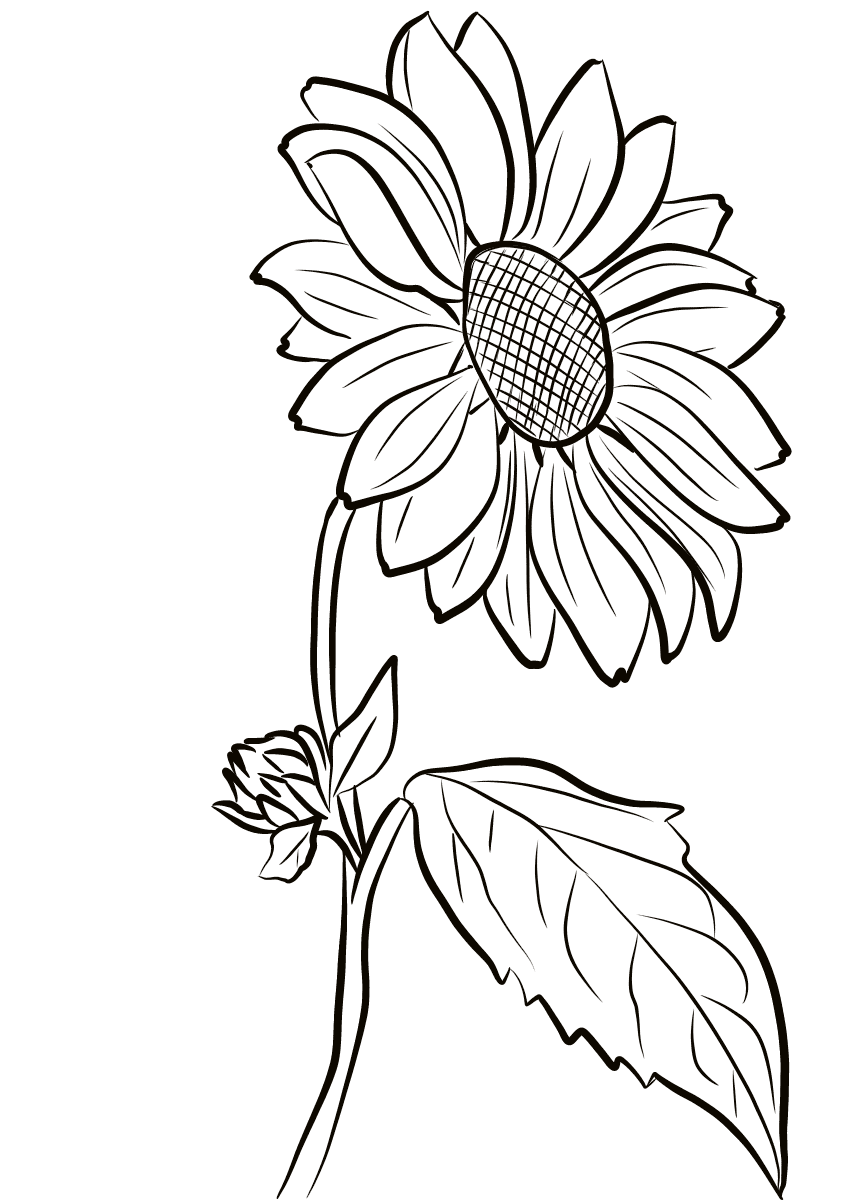 flower coloring pages sun flower