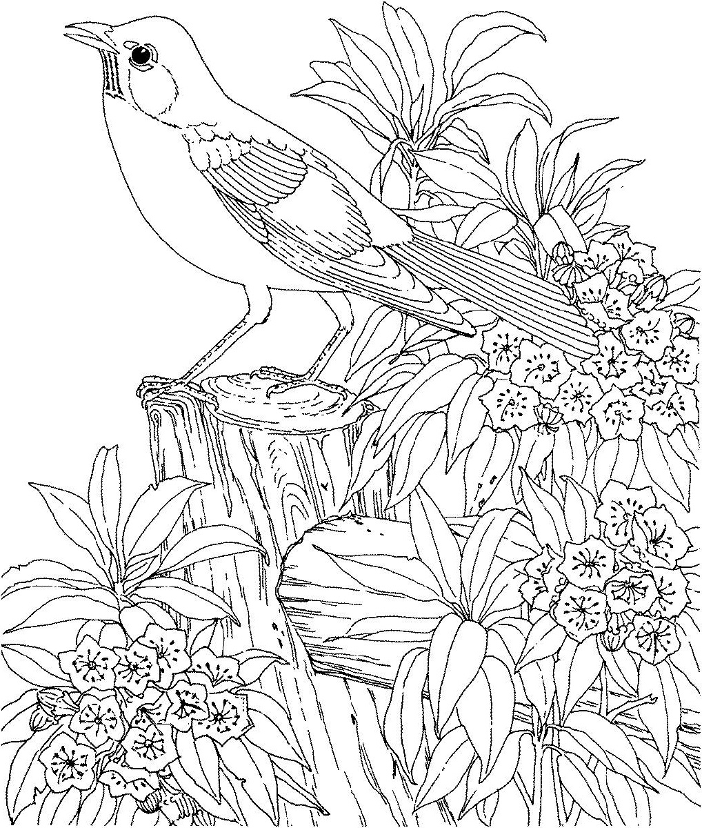 printable coloring pages for adults plants and bird