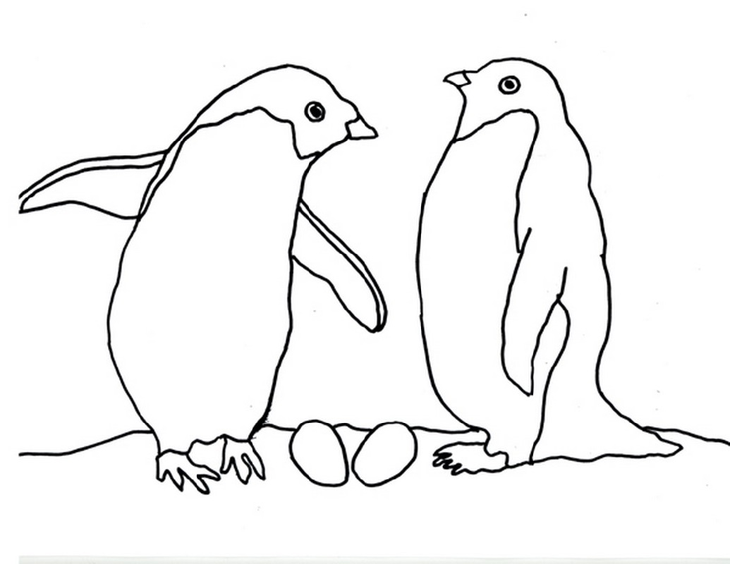 penguin coloring pages penguin duo