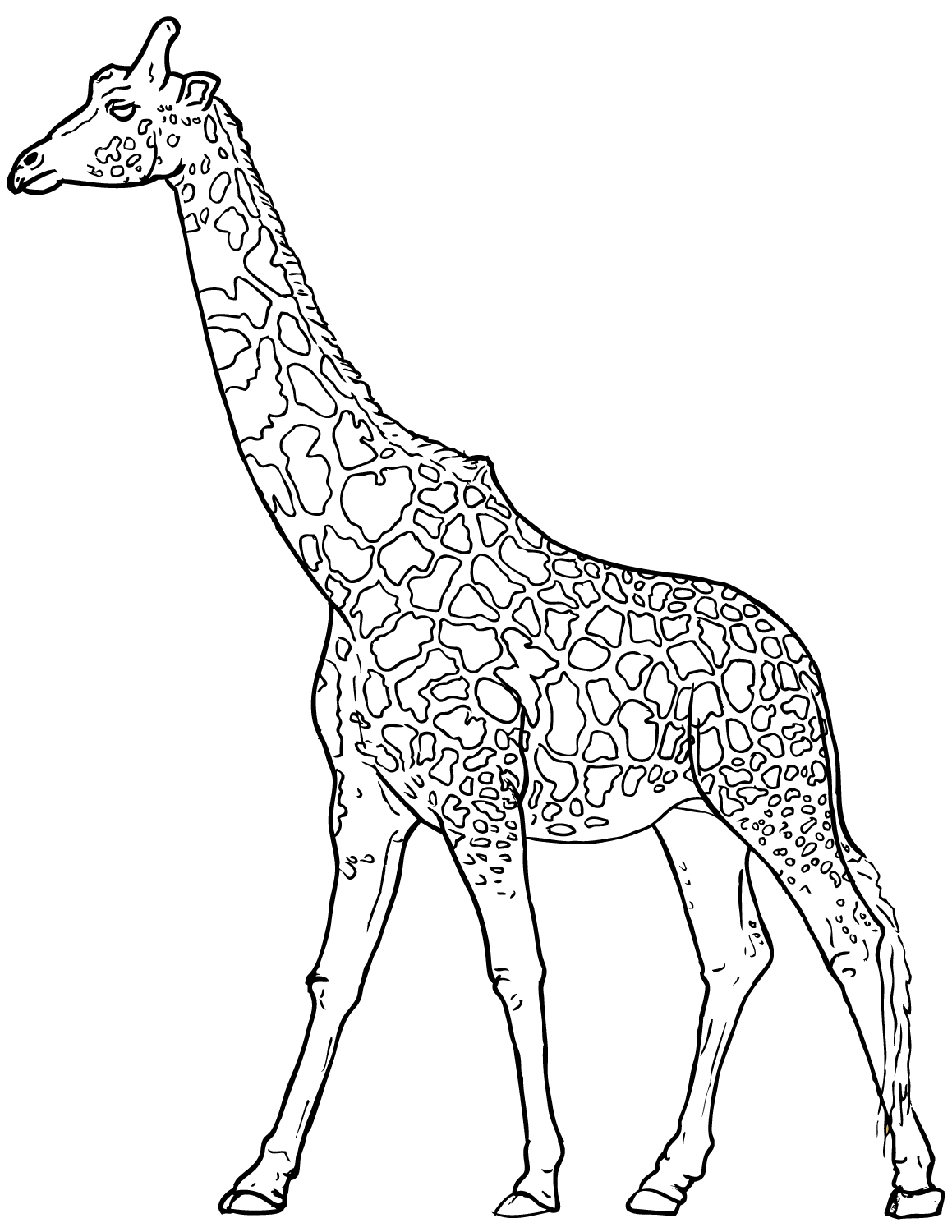 giraffe coloring pages giraffe