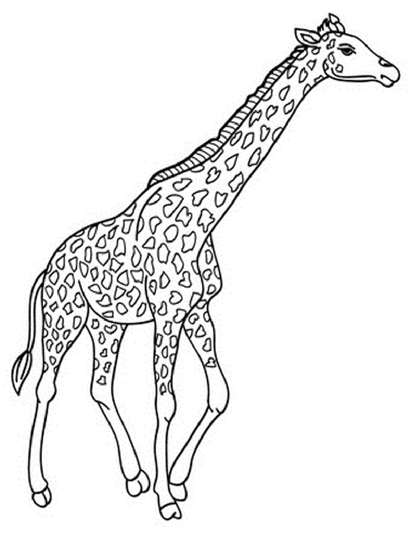 giraffe coloring pages run 2