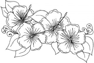 hawaiian-flower-coloring-page-flower-2