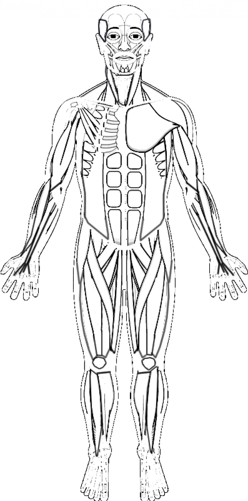 human-muscles-coloring-key-1