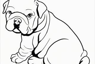 pitbull coloring pages cute pitbull