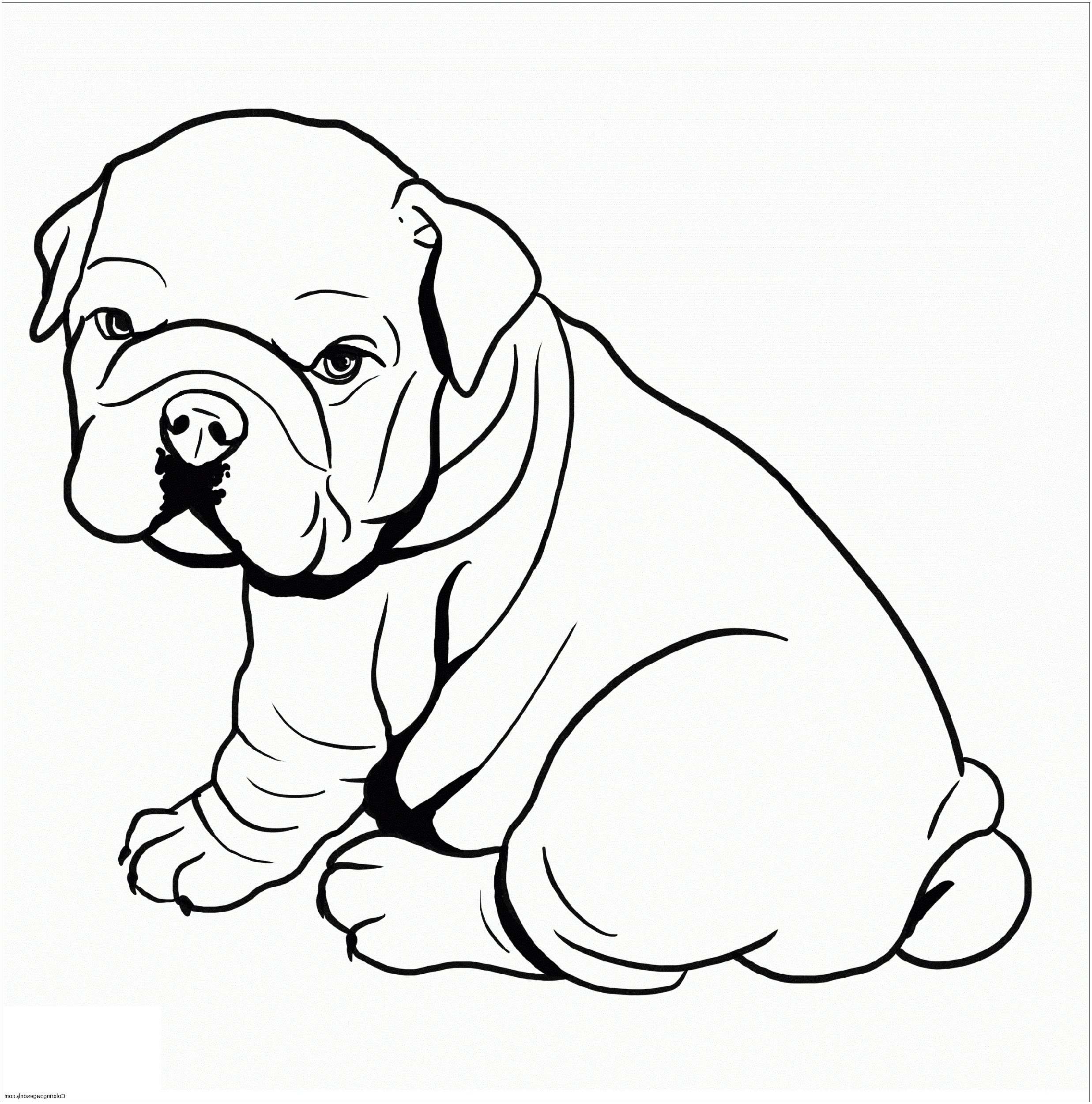 pitbull coloring pages cute pitbull