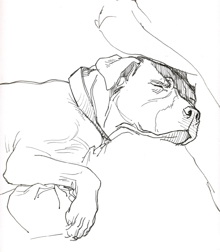 pitbull coloring pages pitbull dog sleeping