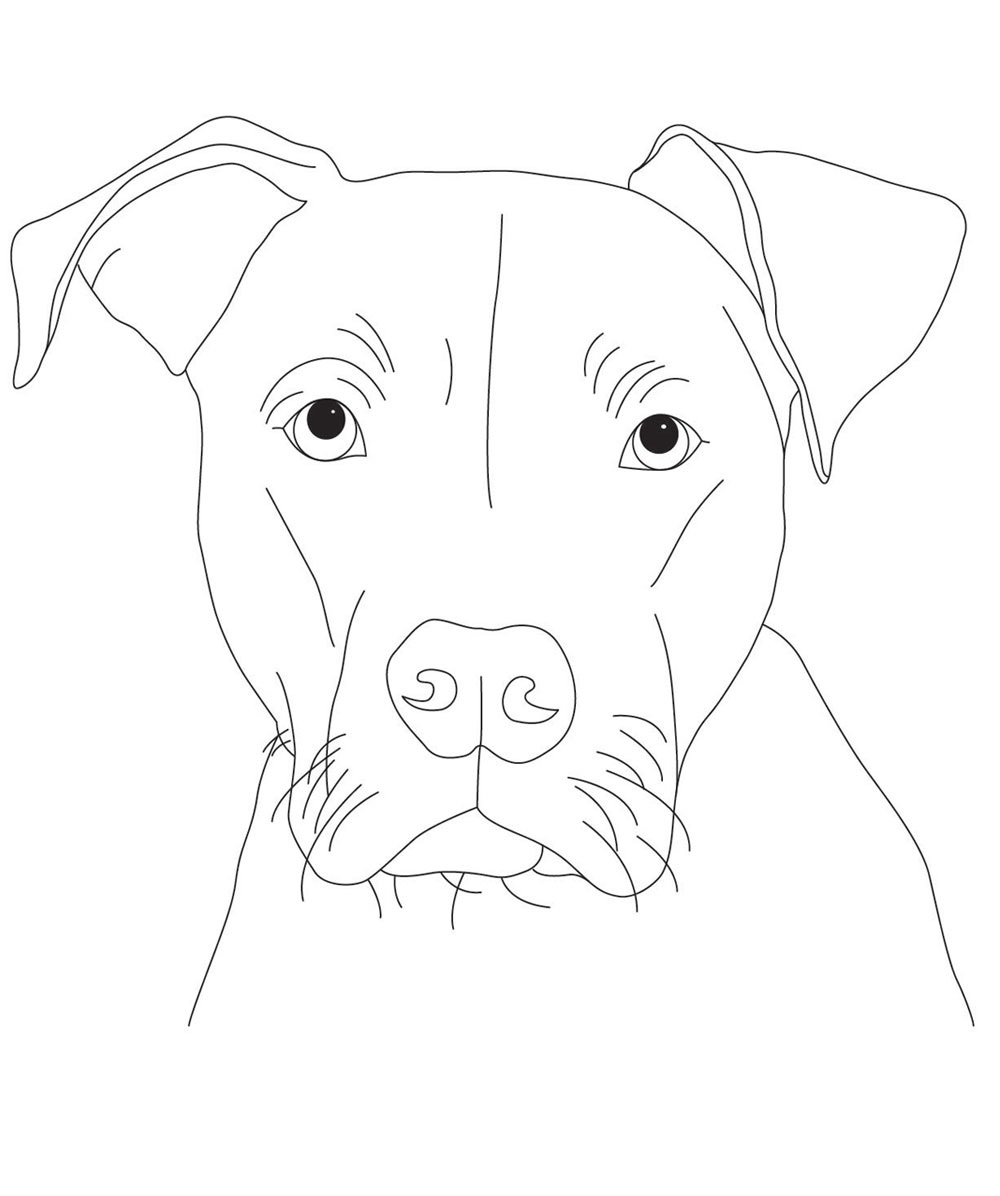 pitbull coloring pages pitbull face