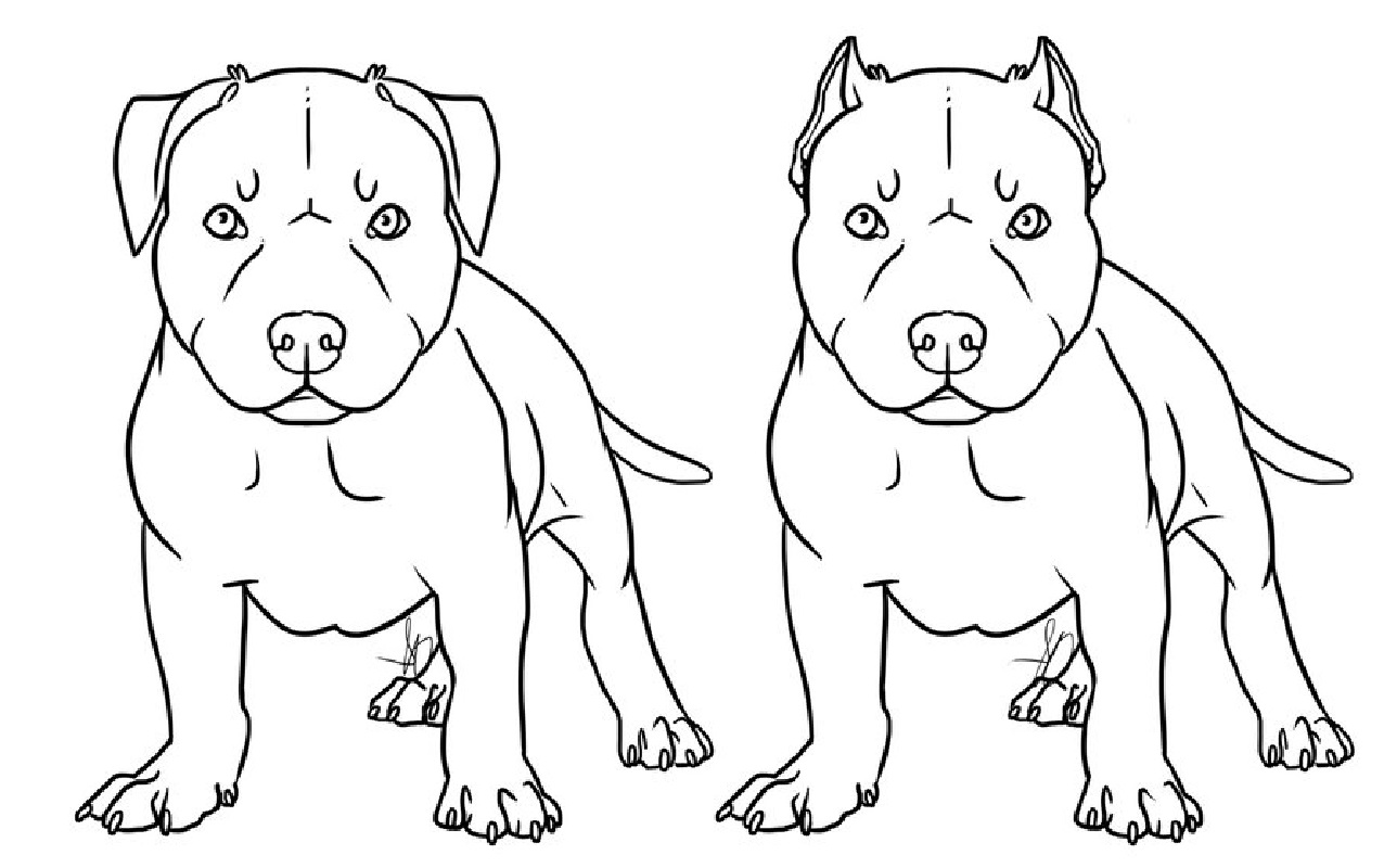 pitbull coloring pages puppy