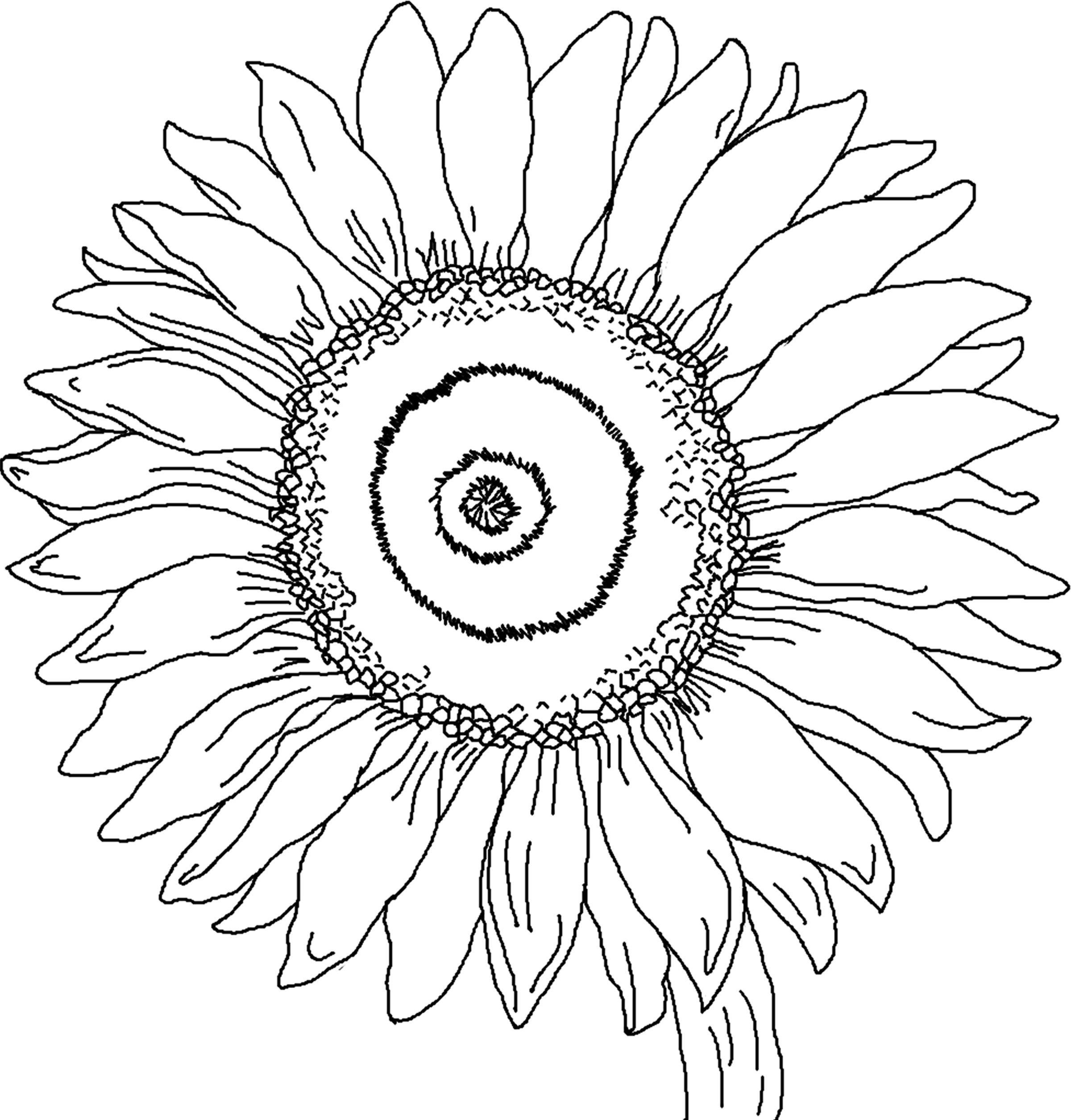 sunflower coloring page 2