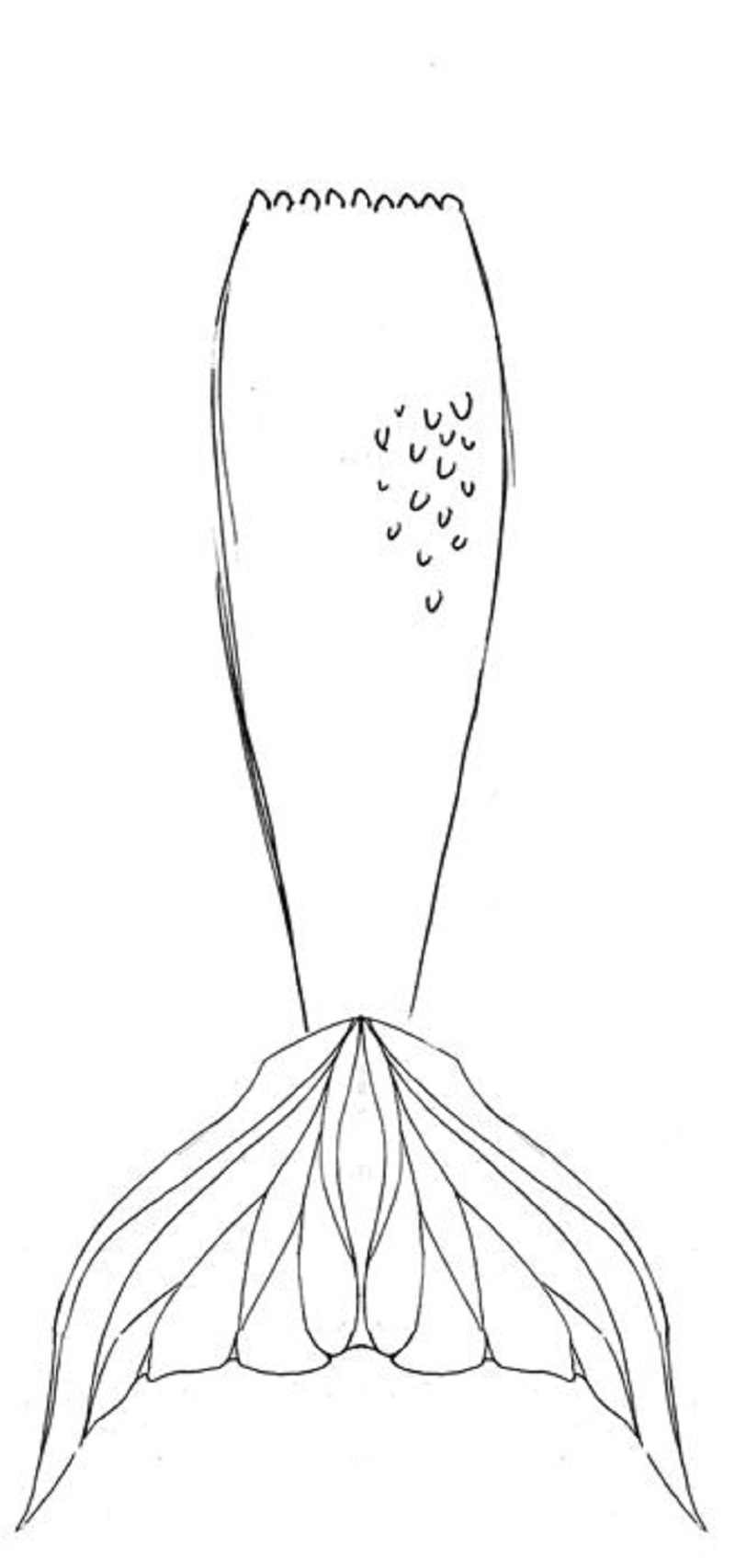 mermaid tail coloring page 2