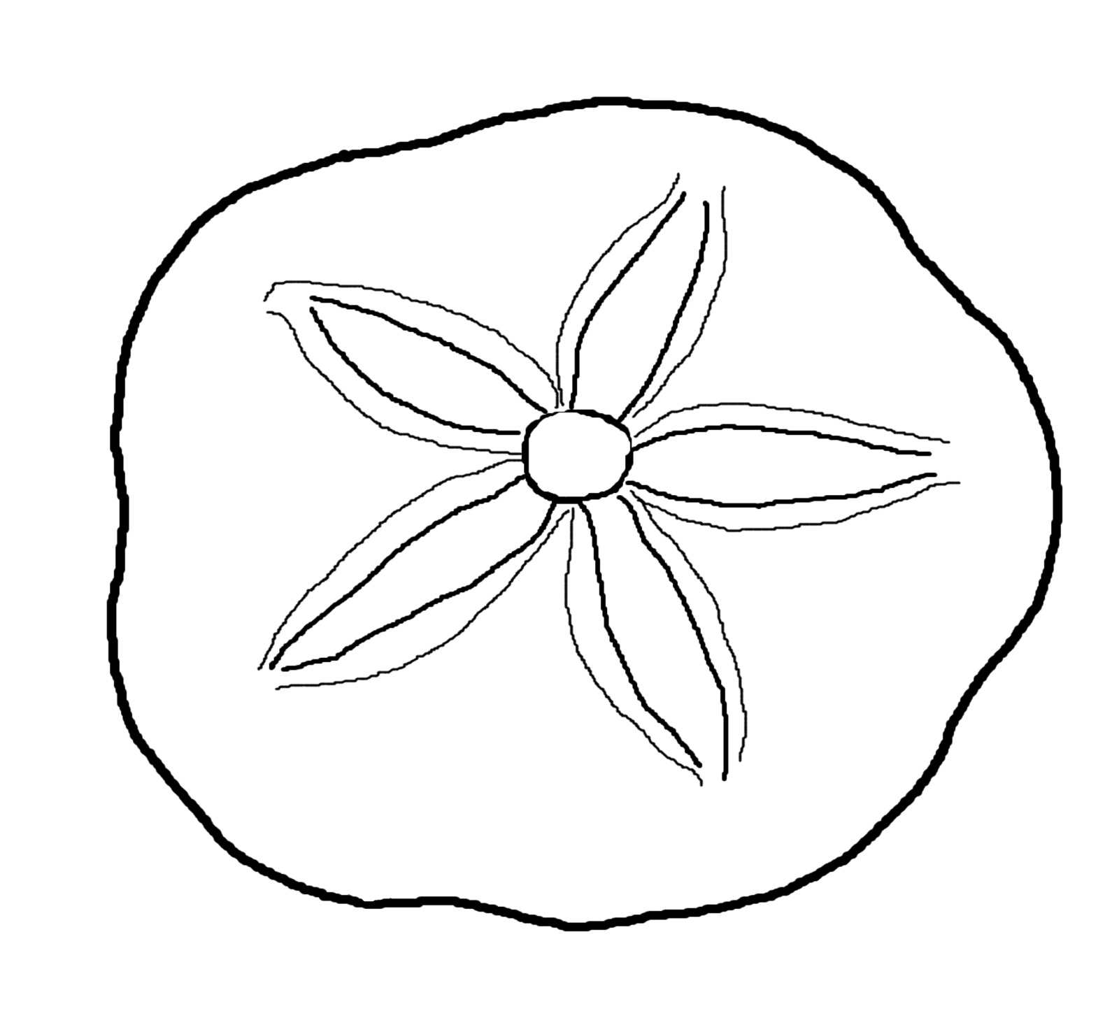 seashell coloring pages seashell 1