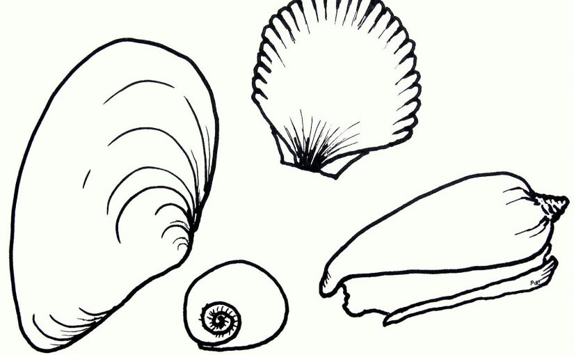 seashell coloring pages seashell 3