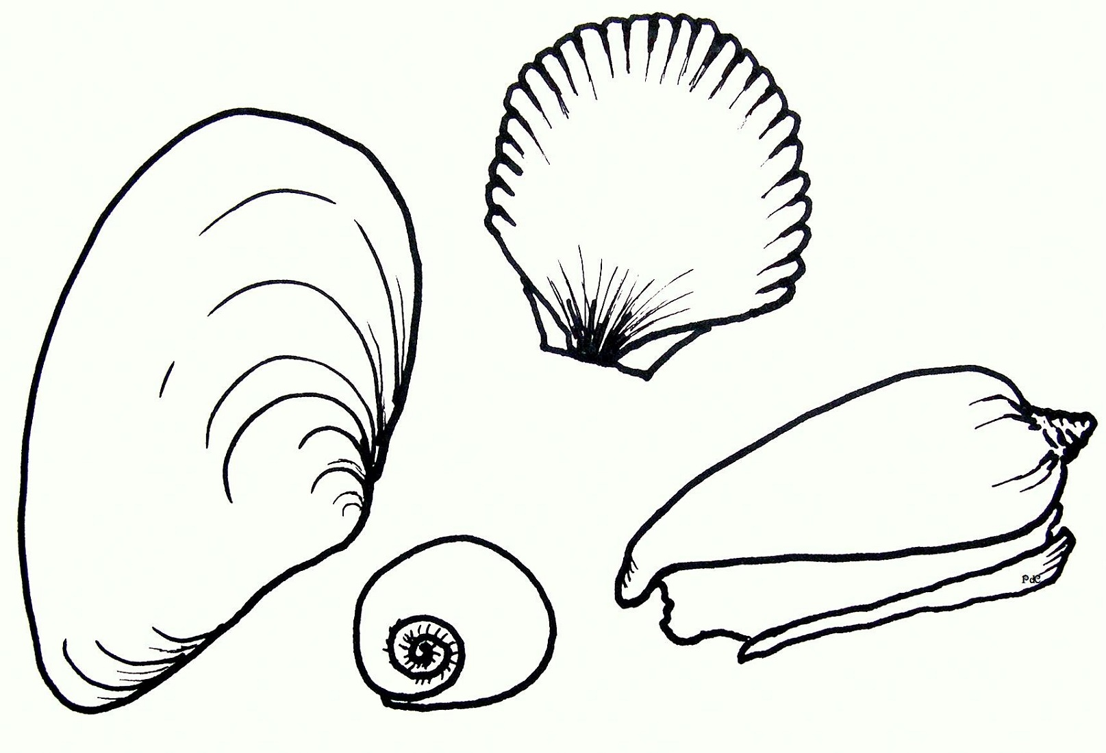 seashell coloring pages seashell 3