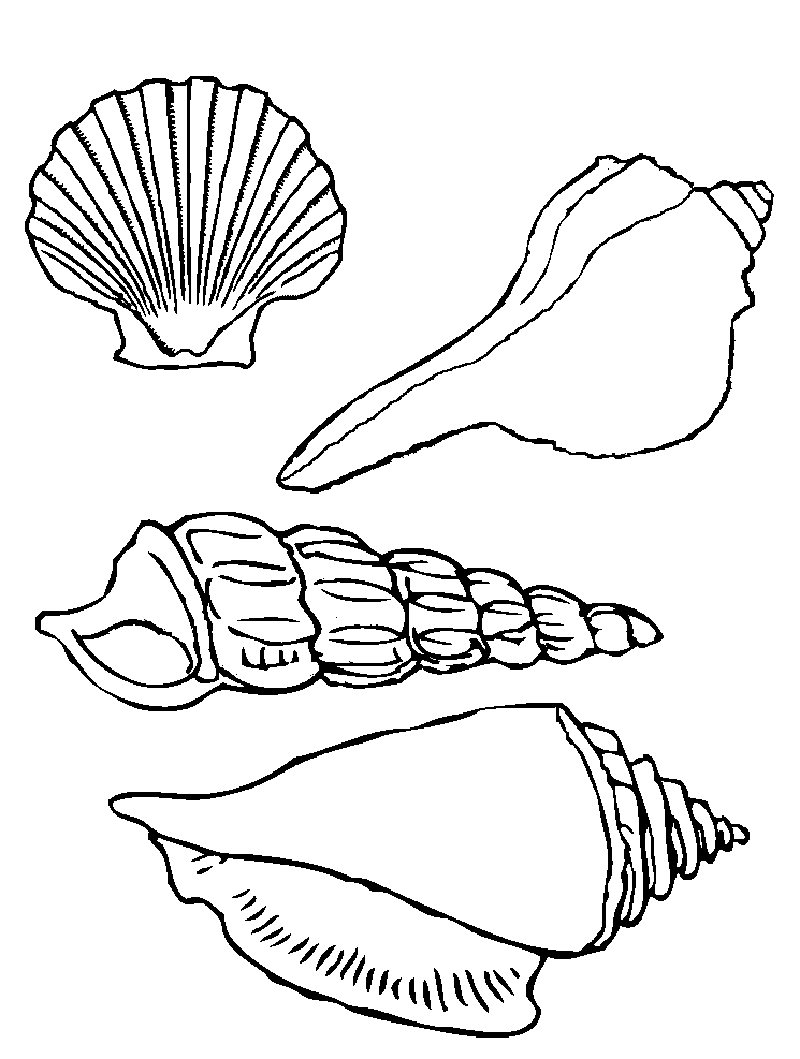 seashell coloring pages seashell seafood