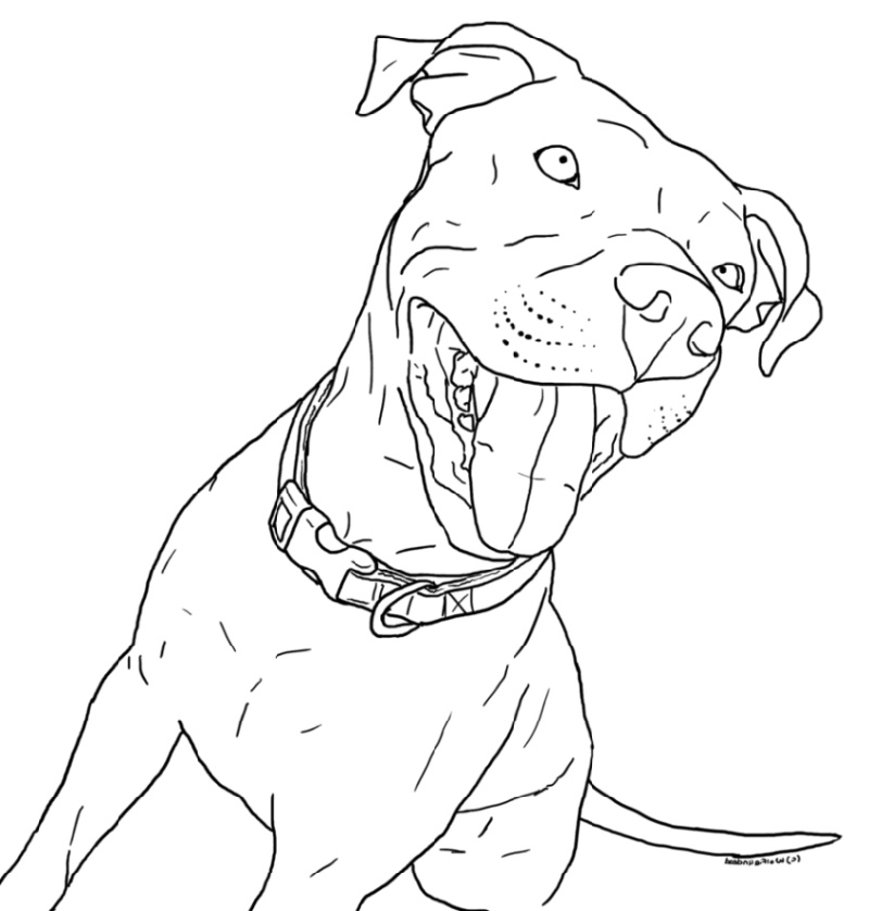 Pitbull Coloring Pages Dog