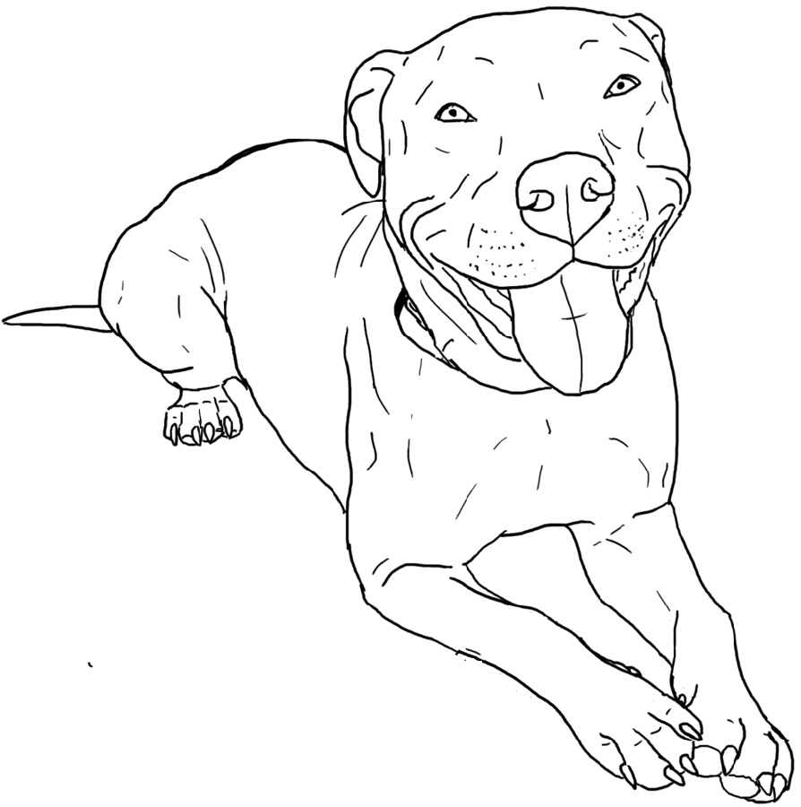 Pitbull Coloring Pages For Kids