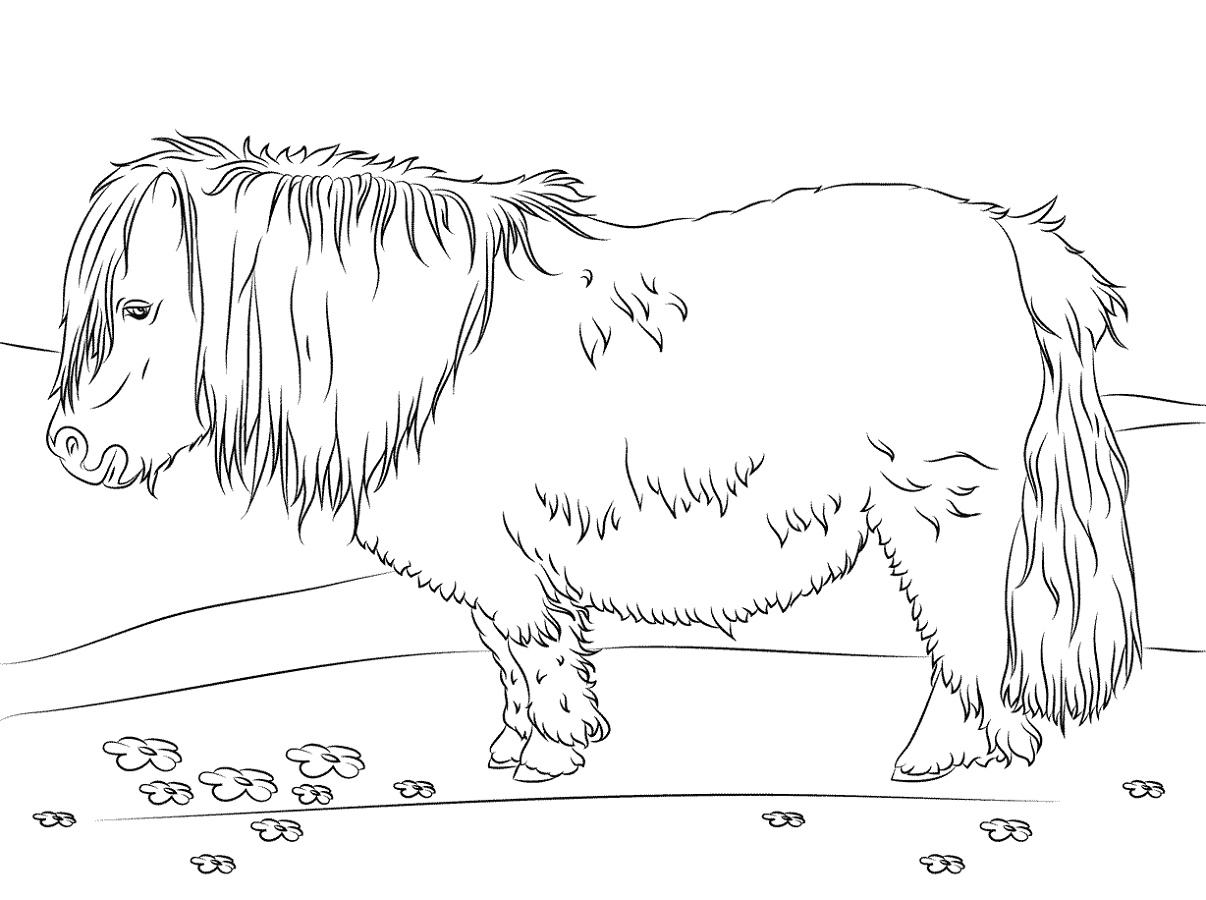 Shetland Pony Coloring Pages