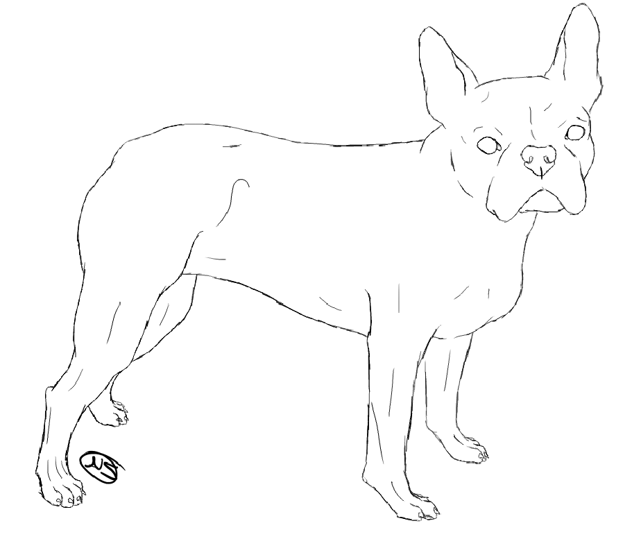 boston terrier coloring pages 3