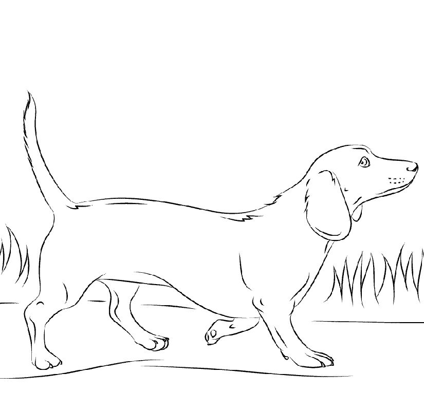 dachshund coloring pages 3dachshund coloring pages 3