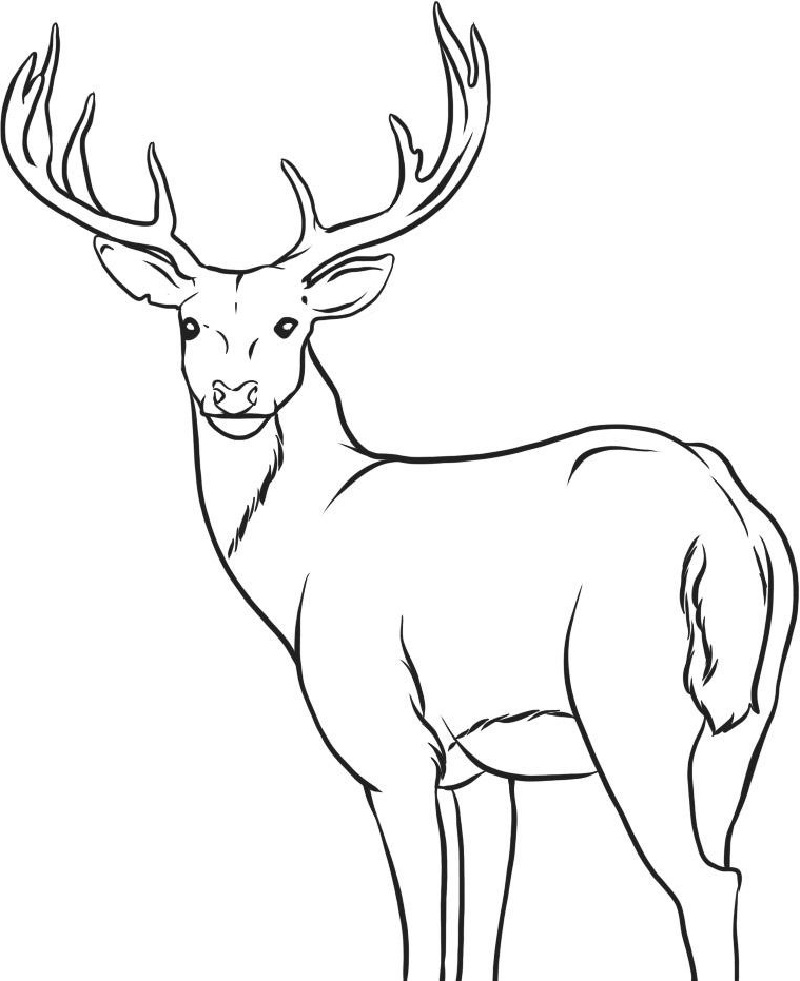 Deer Coloring Pages Printable Educative Printable