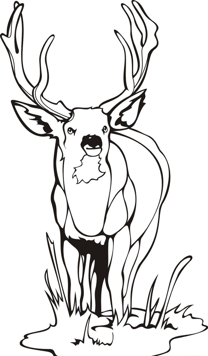 deer coloring pages 2