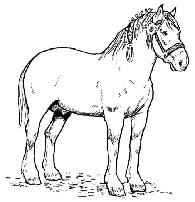 horse coloring book 5