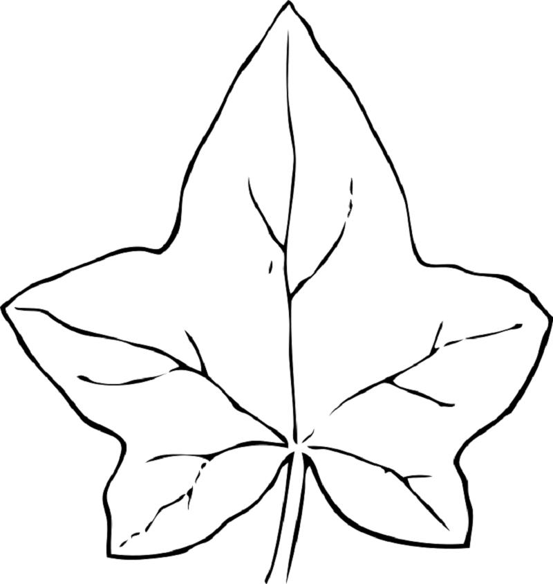 leaf coloring pages leaf 2
