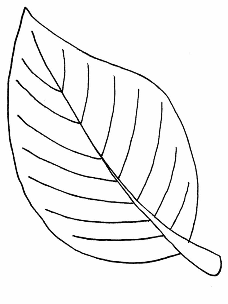 leaf coloring pages leaf 3