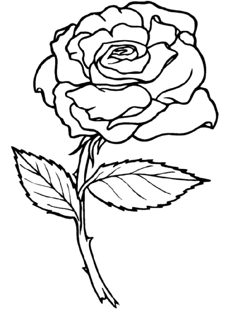 rose coloring pages 4