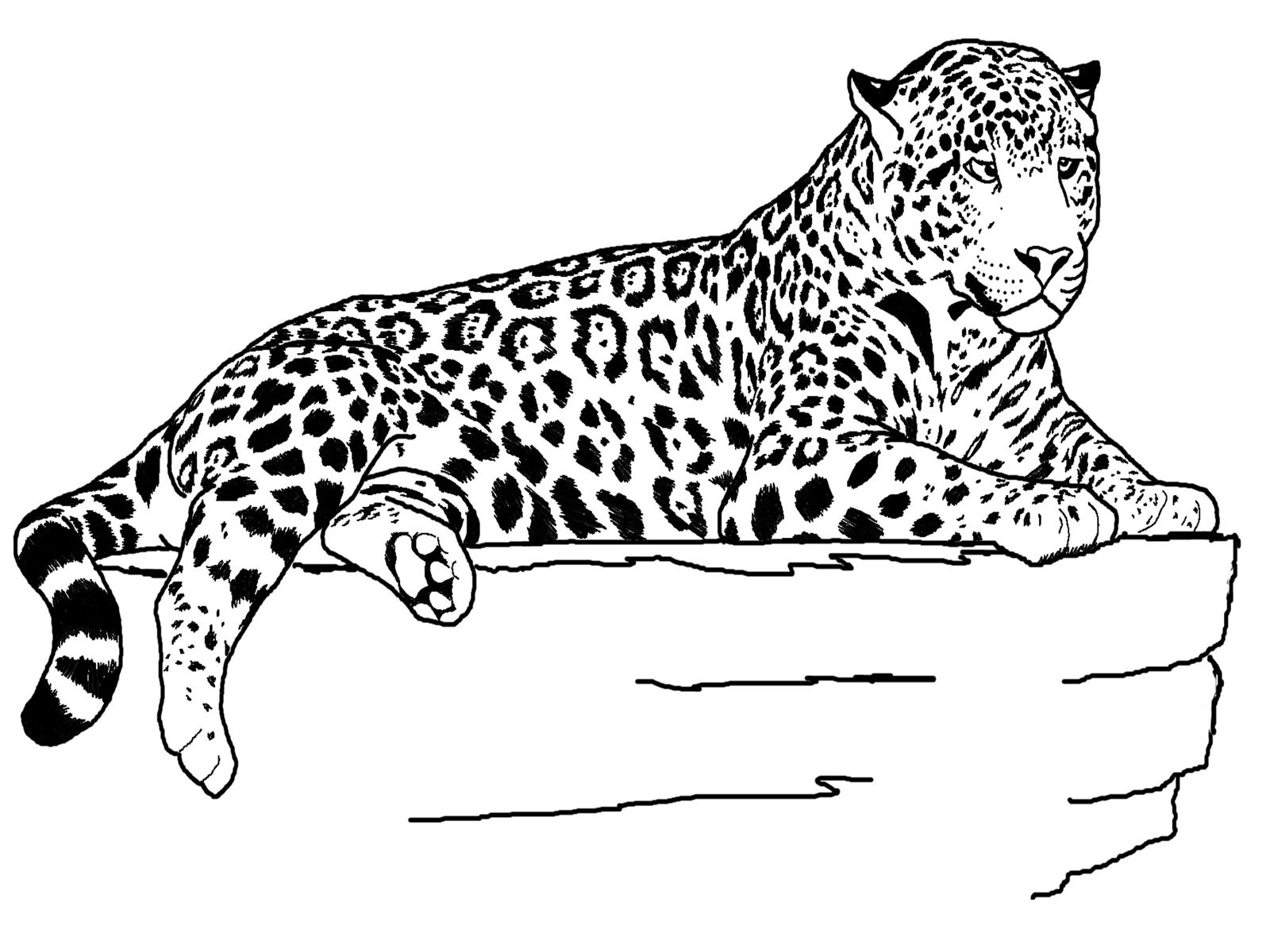 Jaguar coloring pages one
