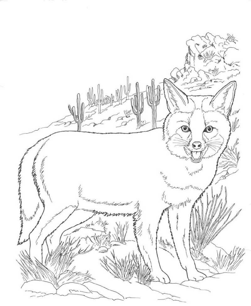 fox coloring pages fox garden