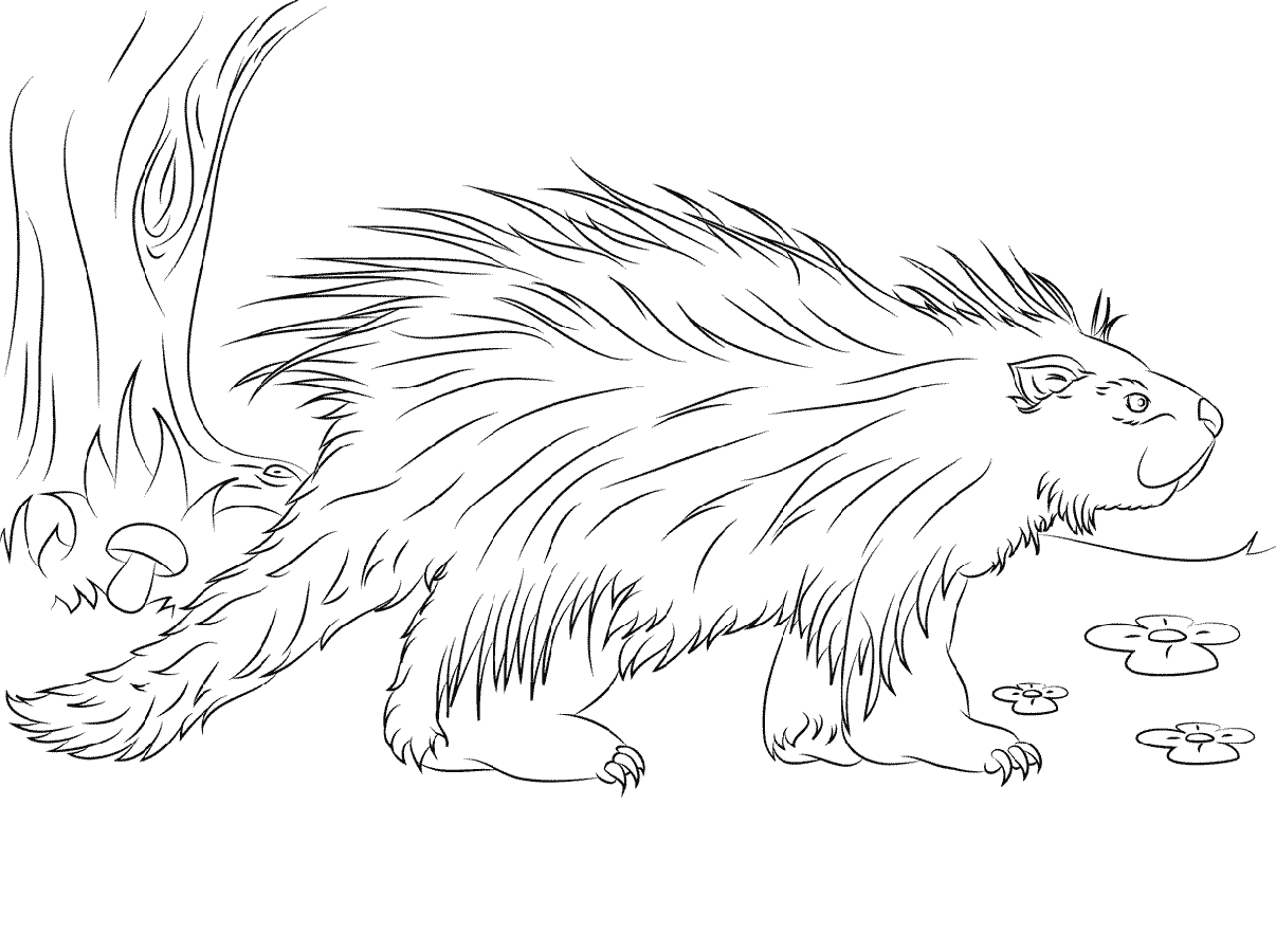 porcupine coloring pages 2