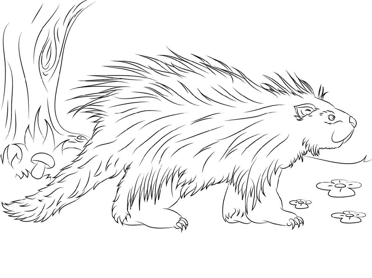 porcupine coloring pages 2
