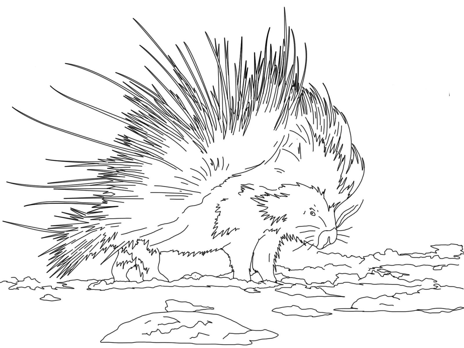 porcupine coloring pages 3