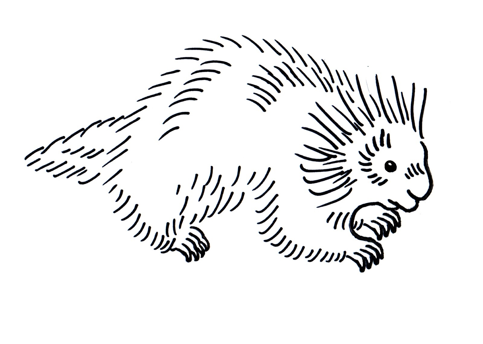 porcupine coloring pages 5