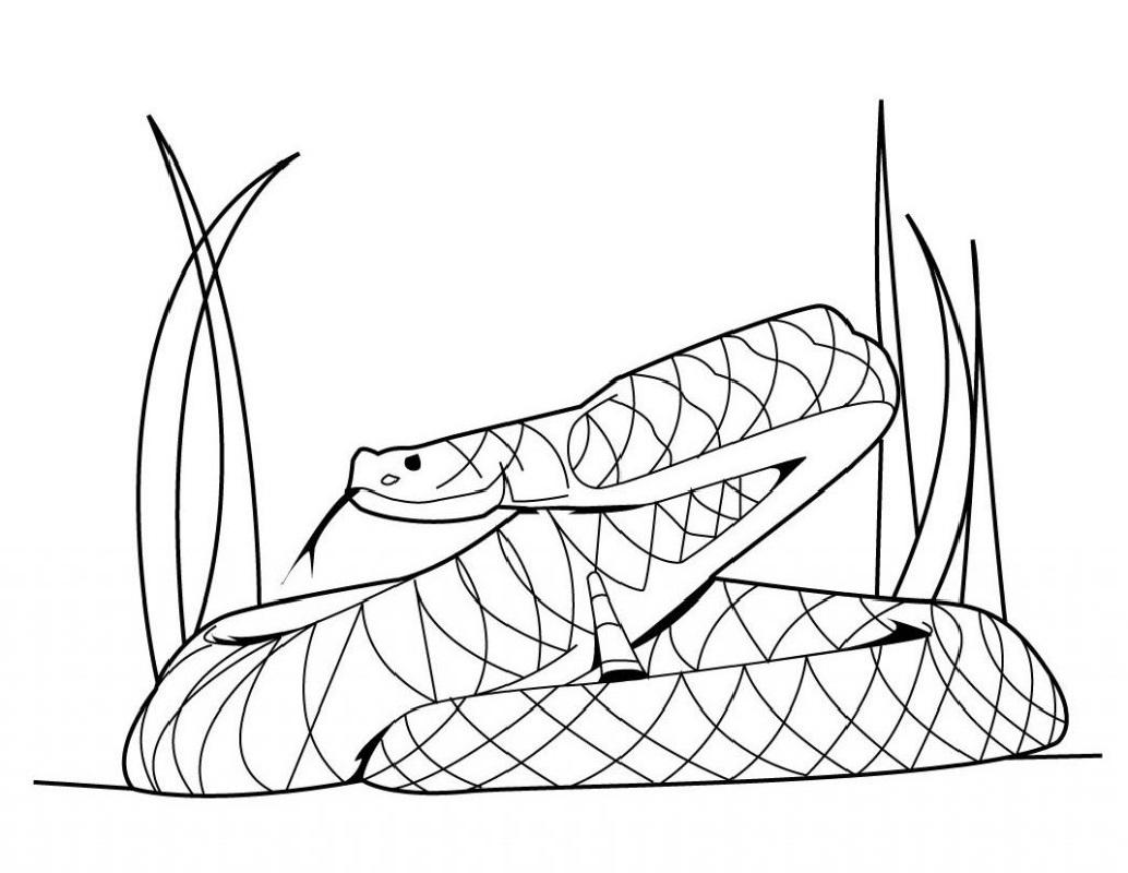 rattlesnake coloring page 2