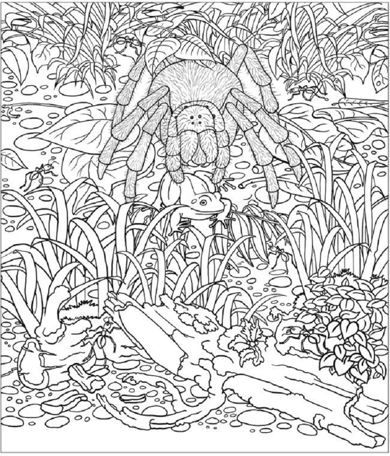 amazon coloring books 2