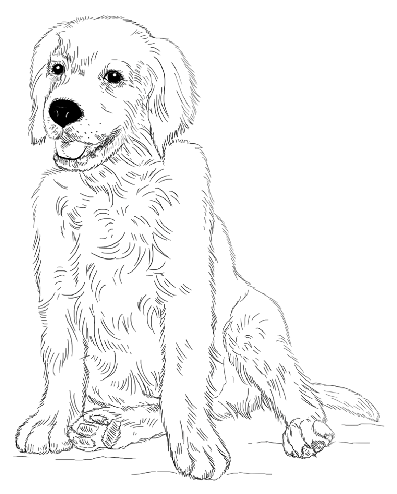 golden retriever coloring page 2