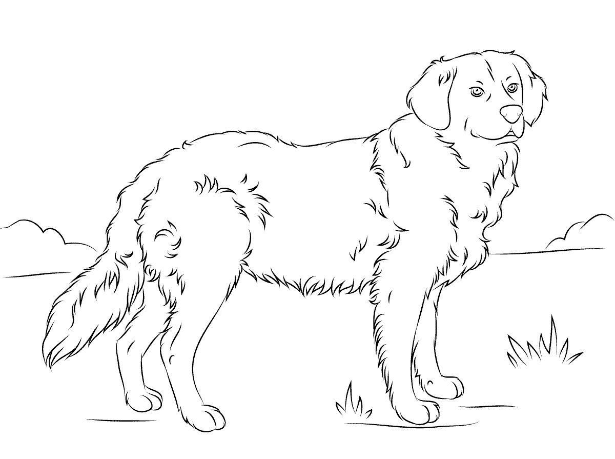 golden retriever coloring page 3