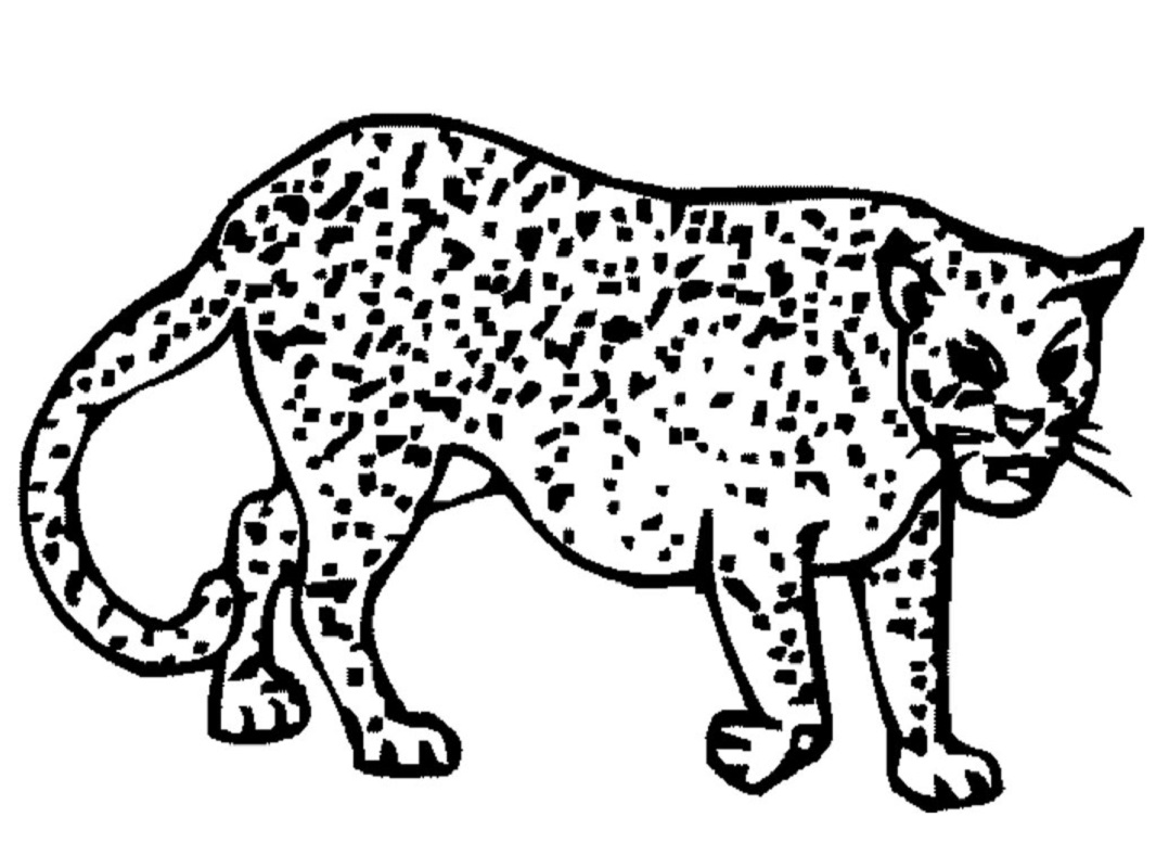 cheetah coloring pages 2