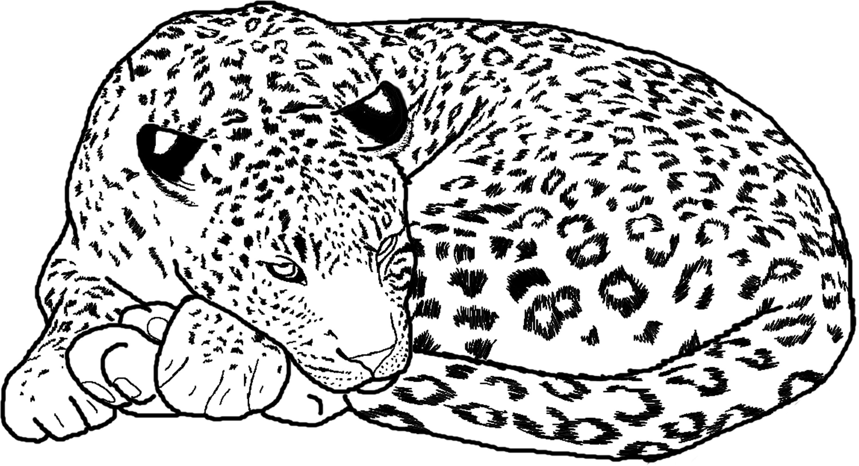 cheetah coloring pages 3