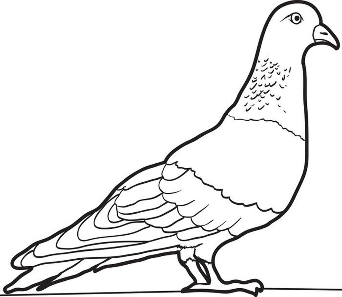 farm animal coloring pages pigeon
