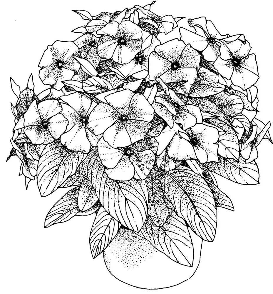 flower coloring pages for adults 4