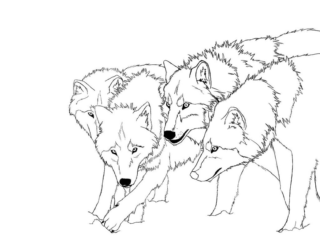 wolf coloring pages 3