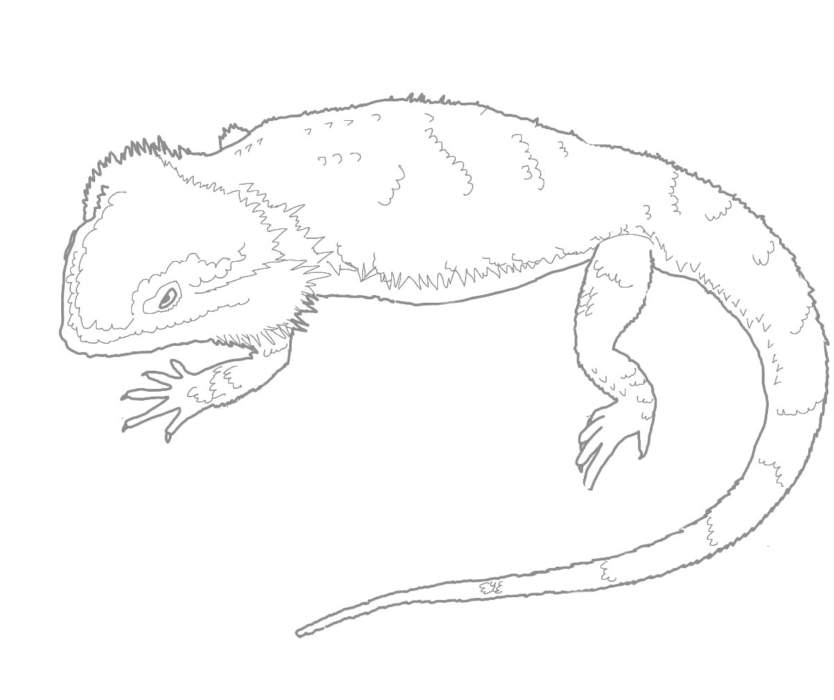 bearded dragon coloring page 5